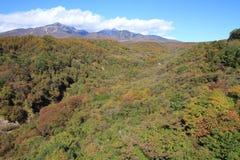 De herfstbladeren in Kiyosato-hoogland, Yamanashi royalty-vrije stock foto