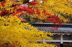 De herfstbladeren in Kyoto, Japan Royalty-vrije Stock Fotografie