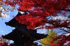De herfstbladeren in Kyoto, Japan Stock Afbeelding