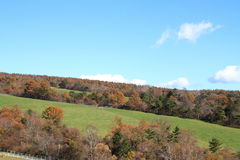 De herfstbladeren in Makiba-park, Kiyosato-hoogland royalty-vrije stock afbeeldingen