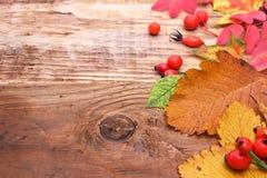 De herfstbladeren met bessen Stock Fotografie