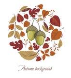 De herfstbladeren met eikel Stock Afbeeldingen