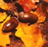 De herfstbladeren met eikels over houten achtergrond met leeg exemplaar Stock Afbeeldingen