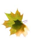De herfstbladeren met exemplaarruimte die worden geïsoleerd Royalty-vrije Stock Fotografie