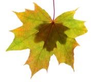 De herfstbladeren met exemplaarruimte die worden geïsoleerd Stock Foto