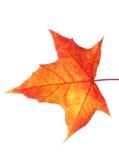 De herfstbladeren met exemplaarruimte die worden geïsoleerd Royalty-vrije Stock Foto