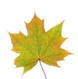 De herfstbladeren met exemplaarruimte die worden geïsoleerd Royalty-vrije Stock Foto's