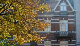 De herfstbladeren met oude de bouwachtergrond royalty-vrije stock afbeelding