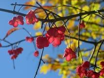 De herfstbladeren met tegenovergesteld licht stock foto