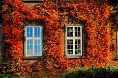 De herfstbladeren met twee witte vensters op oude voorgevel Royalty-vrije Stock Foto's