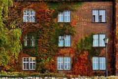 De herfstbladeren met witte vensters op oude voorgevel Royalty-vrije Stock Foto's