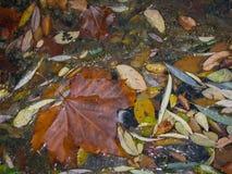 De herfstbladeren in Monasterio DE Piedra, Zaragoza, Aragon, Spanje Stock Foto