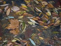 De herfstbladeren in Monasterio DE Piedra, Zaragoza, Aragon, Spanje Stock Afbeeldingen