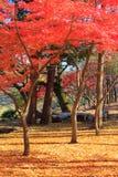 De herfstbladeren in Musashino-park, Tokyo royalty-vrije stock foto's