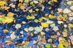 De herfstbladeren na de regen Stock Foto's