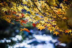 De herfstbladeren naast het Water Royalty-vrije Stock Afbeelding
