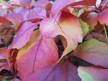 De herfstbladeren in nadruk Stock Foto's
