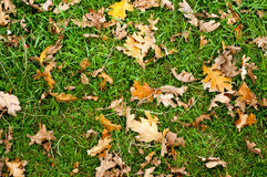De herfstbladeren op de grond Royalty-vrije Stock Foto's