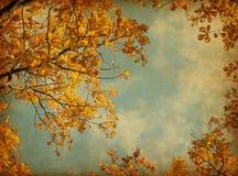 De herfstbladeren op de hemelachtergrond. Stock Afbeeldingen