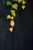 De herfstbladeren op de houten omheining Stock Fotografie