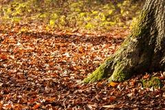 De herfstbladeren op de voet van een boom Stock Afbeeldingen
