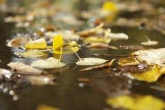 De herfstbladeren op de weg Royalty-vrije Stock Foto's