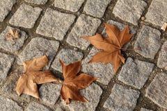 De herfstbladeren op een cobble weg stock foto's