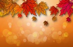 De herfstbladeren op een de herfstachtergrond Stock Fotografie
