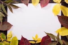 De herfstbladeren op een donkere houten achtergrond Autumn Leaves Background Stock Fotografie