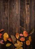 De herfstbladeren op een donkere oude houten achtergrond met exemplaar-ruimte Bri Stock Afbeeldingen