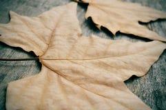 De herfstbladeren op een doorstane houten achtergrond Royalty-vrije Stock Foto