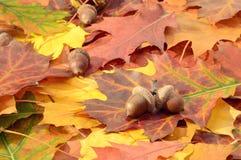 De herfstbladeren op een grond Stock Foto's