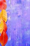 De herfstbladeren op een houten achtergrond Royalty-vrije Stock Afbeelding