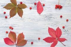 De herfstbladeren op een houten oppervlakte Rode bladeren en bessen van viburnum op een houten-bevlekte achtergrond royalty-vrije stock foto's