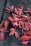 De herfstbladeren op een oude donkere houten achtergrond Royalty-vrije Stock Foto