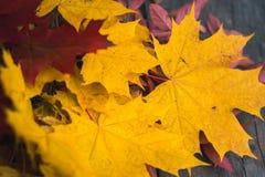De herfstbladeren op een oude donkere houten achtergrond Royalty-vrije Stock Foto's
