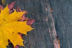 De herfstbladeren op een oude donkere houten achtergrond Stock Foto's