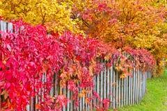 De herfstbladeren op een tuinomheining Stock Afbeeldingen