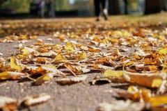 De herfstbladeren op een voetpad stock afbeelding