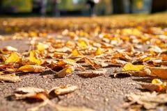 De herfstbladeren op een voetpad stock foto
