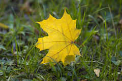 De herfstbladeren op gras Royalty-vrije Stock Foto's