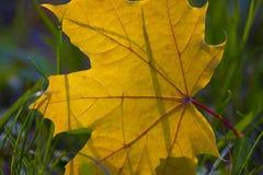 De herfstbladeren op gras Royalty-vrije Stock Fotografie