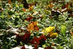De herfstbladeren op gras Stock Foto's
