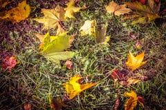 De herfstbladeren op het gras, kleurrijke bladeren, gevallen bladeren stock foto