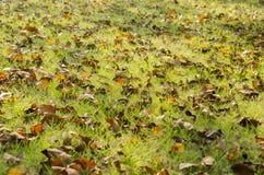 De herfstbladeren op het gras met rood wordt behandeld dat Royalty-vrije Stock Fotografie