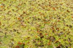 De herfstbladeren op het gras met rood wordt behandeld dat Stock Afbeelding