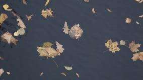 De herfstbladeren op het water stock videobeelden