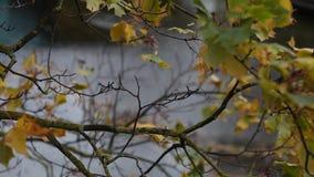De herfstbladeren op het water stock video