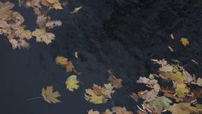 De herfstbladeren op het water stock footage