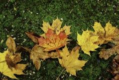 De herfstbladeren op mos Stock Afbeelding